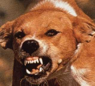 rabid_dog_small