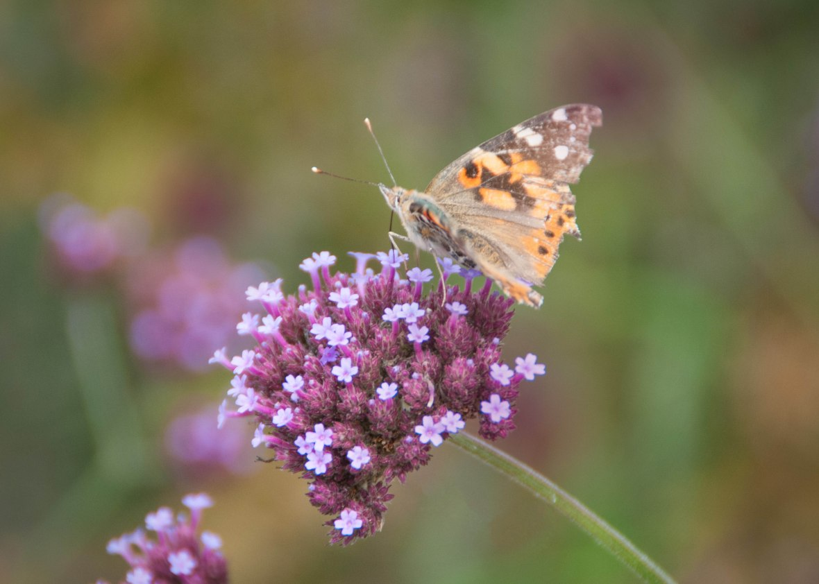 Planting flowers in a variety of colors will help attract different things. For instance, hummingbirds like red, while many butterflies and moths like purple.