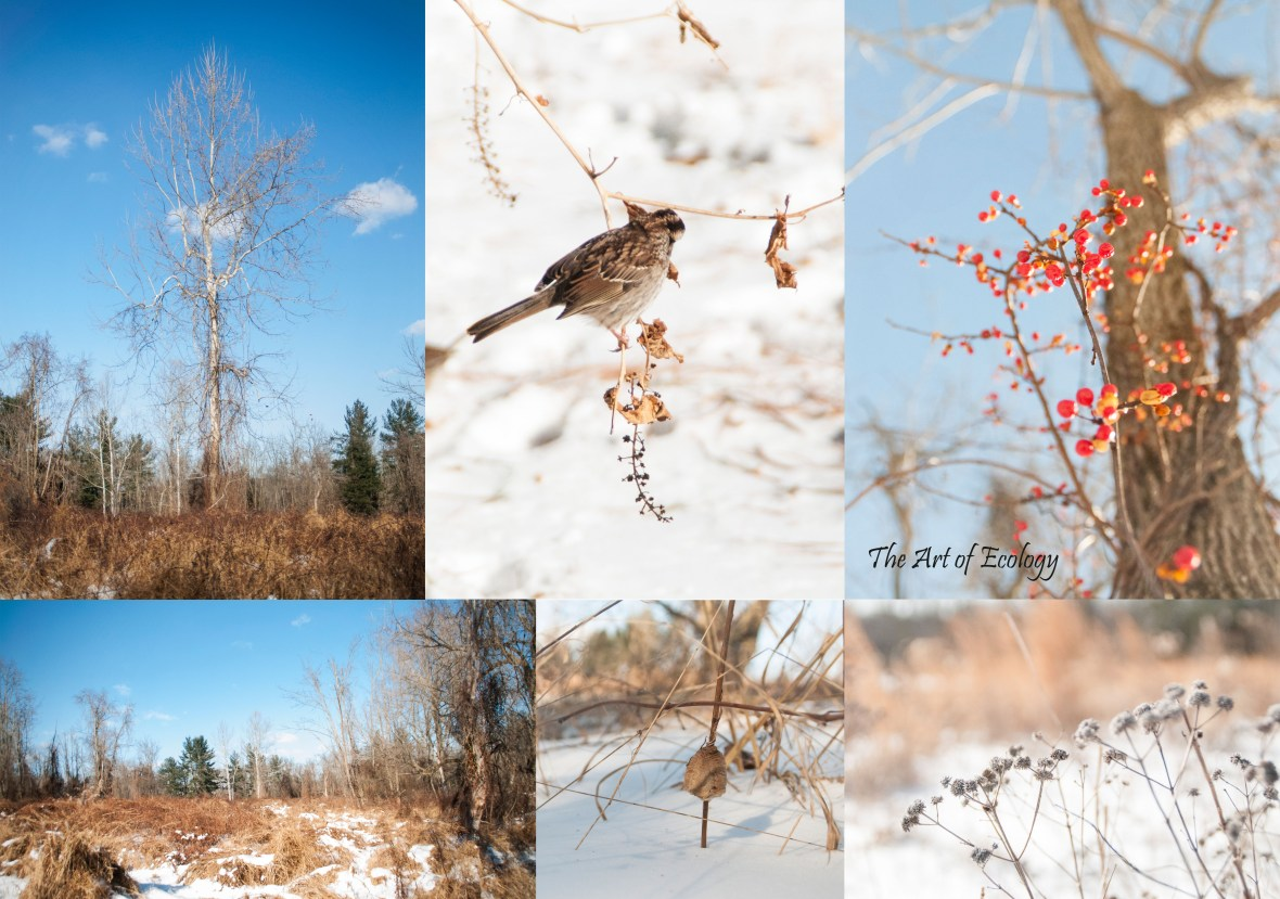 Winter 2017/18 Selections from Tyler State Park Pollinator Habitat Restoration Photography
