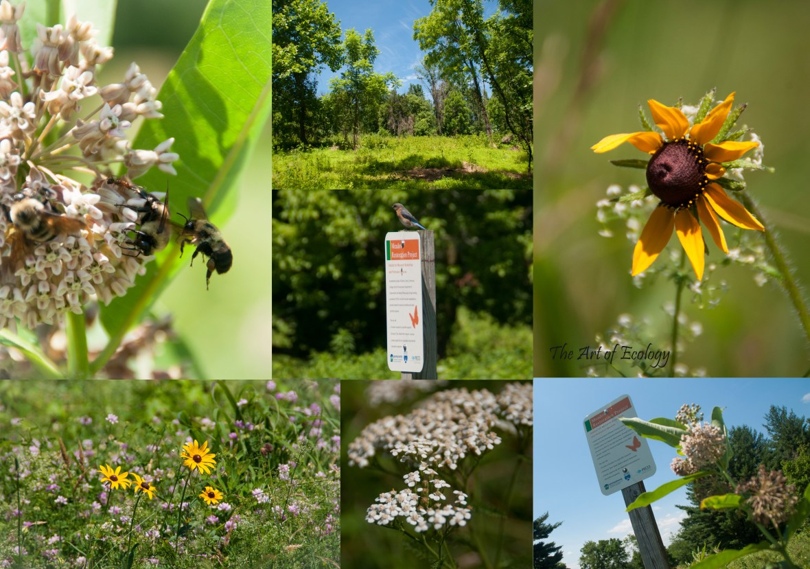 Summer 2018 Selections from Tyler State Park Pollinator Habitat Restoration Photography