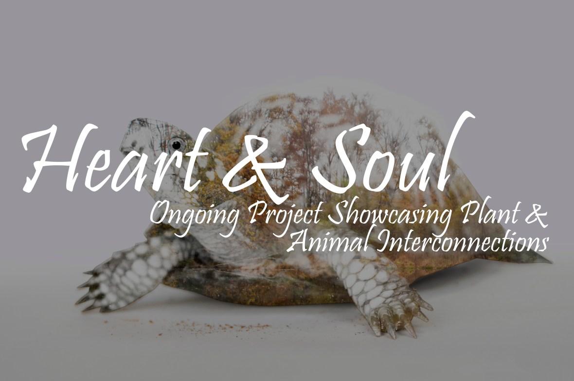 Heart and Soul portfolios