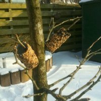 Using toilet paper roles and peanut butter to make bird food