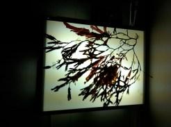 seaweed lightbox