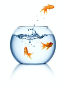 A goldfish jumping out of the fishbowl