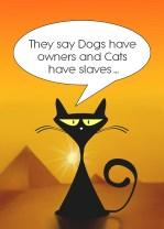 catpyramid