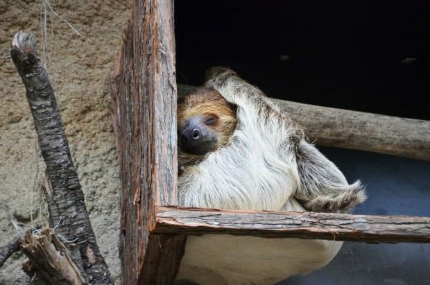 sloth-359217_1920