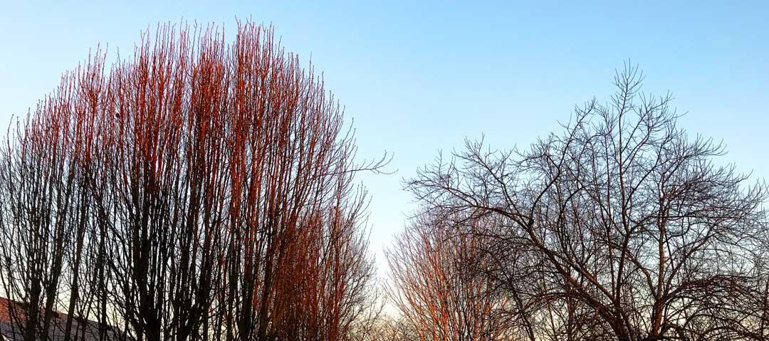 Tree Glow: The Wonder Where My Day Begins