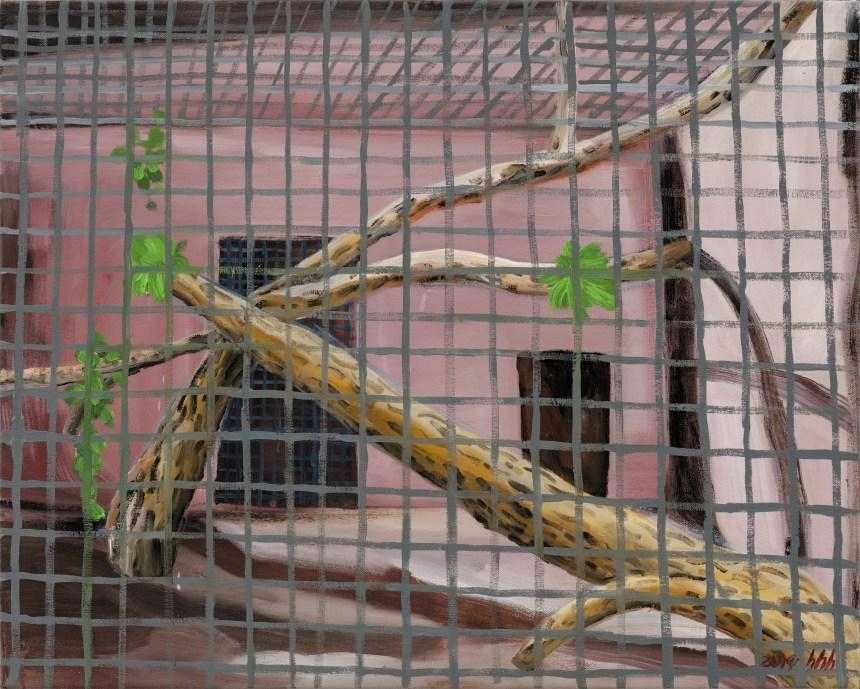 Chlorocebus Sabaeus 綠猴