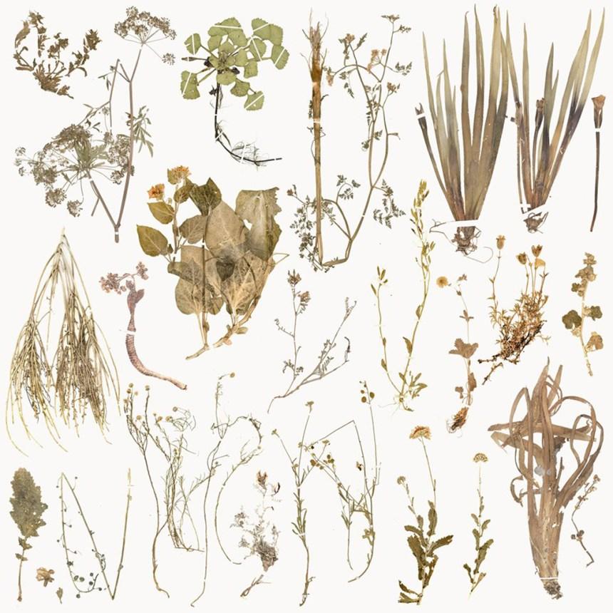 The Extinct Flora in Spain   源自西班牙的絕跡花草, 2019, Mixed media on policanvas 複合媒材、畫布, 200 x 200 cm, Courtesy of 双方藝廊 Double Square Gallery