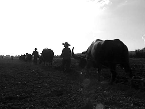 vlcsnap-2014-07-28-15h49m50s81