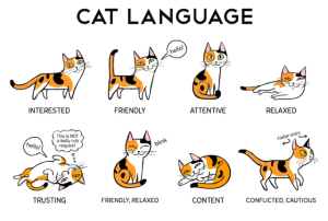 Decipher Your Cat's Body Language With This Helpful Infographic