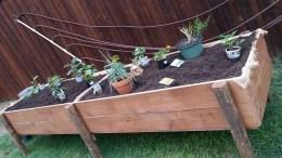 tAB - raised garden (14)