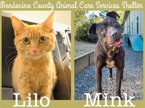 Lilo&Mink