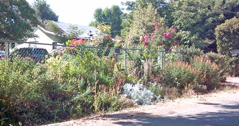 Lambert Garden