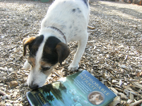 dogwithbook