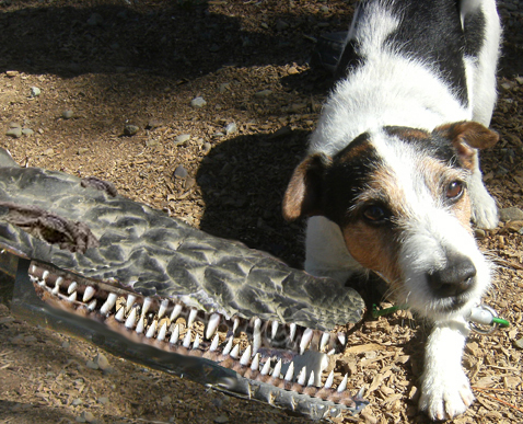 dogwithcroc