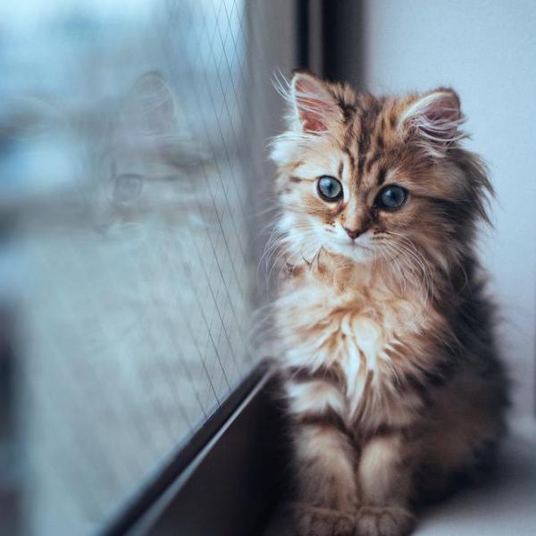 amazing cat pictures