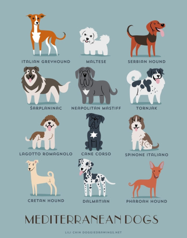 information about dogs - mediterranean dogs
