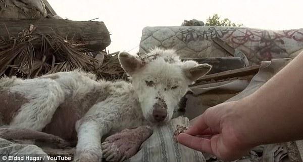 husky transformation