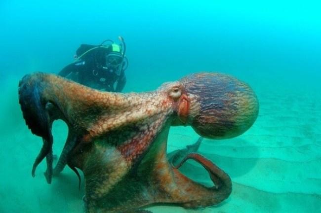do you fear the sea? 10