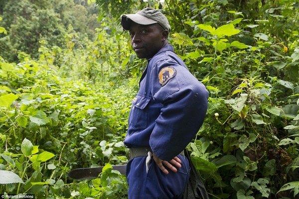 Gorillas and their caretakers 6