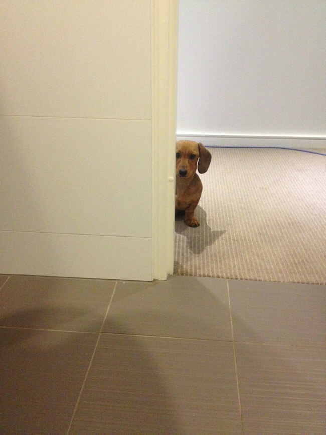 Dogs Sit With You While You Poop 7