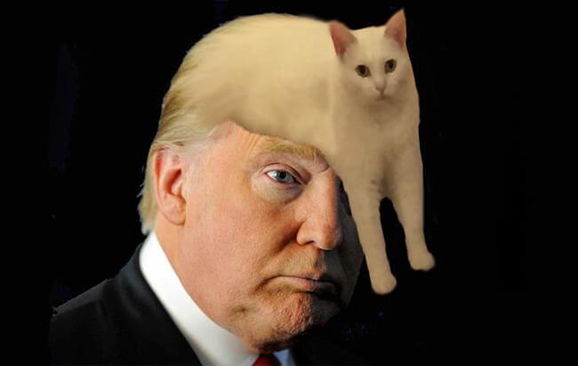 Awkward Half Cat Is The Latest Photoshop Battle Icon We