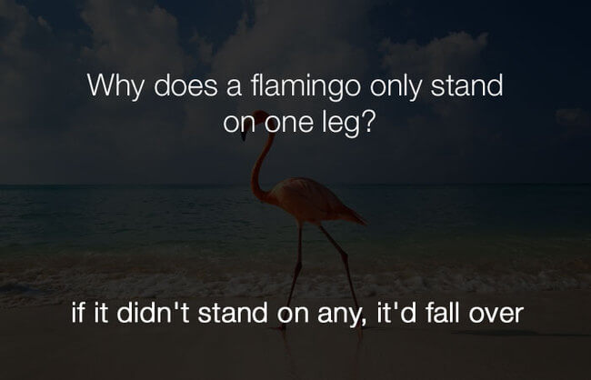 Dumb Jokes Are Actually Funny