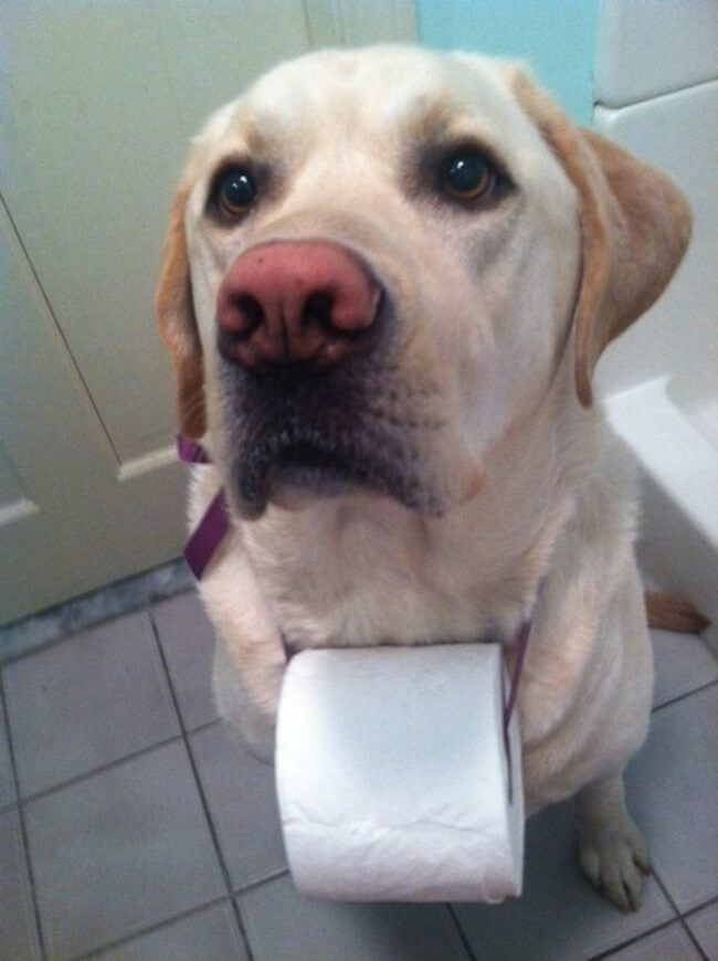 Dogs Sit With You While You Poop 17