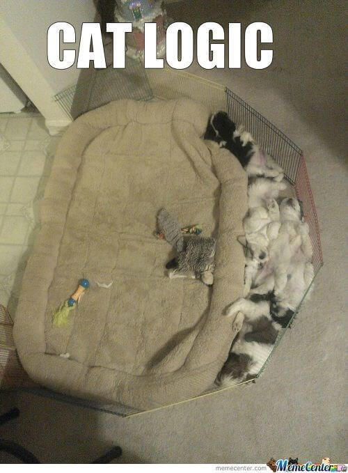 20 Cat Logic Memes Only Cat Owners Will Understand And