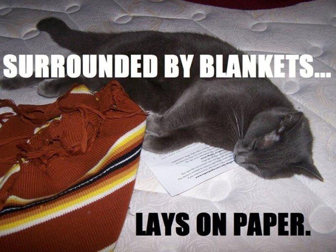 cat logic memes