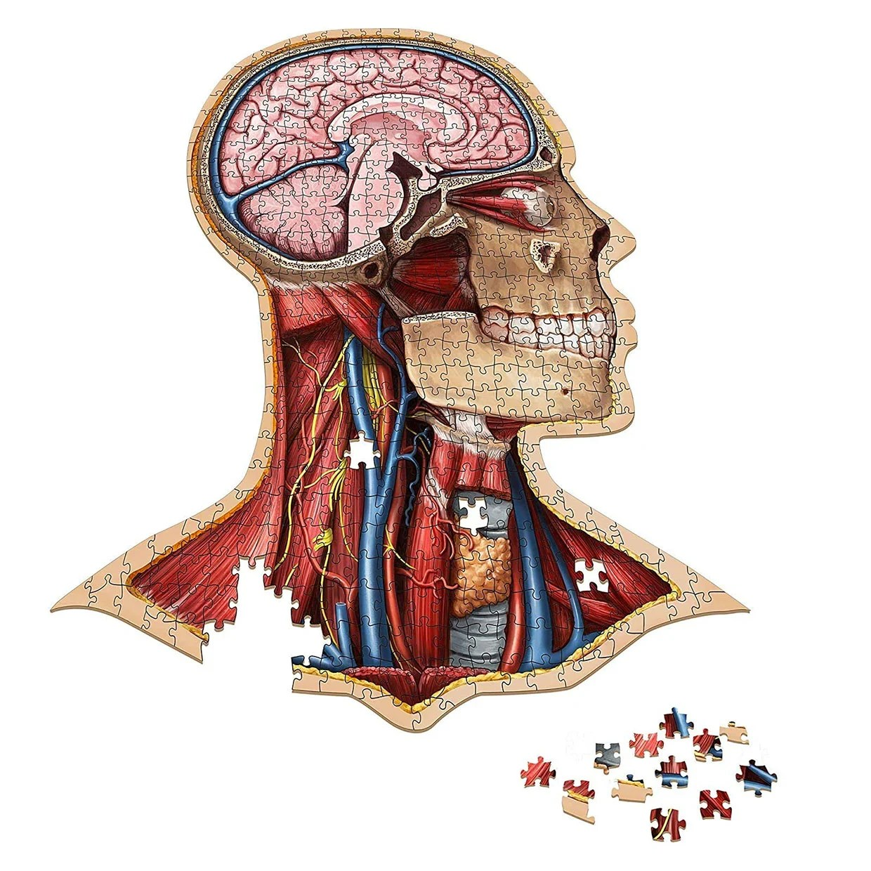 Human Anatomy Jigsaw Puzzles Let You Build Your Insides