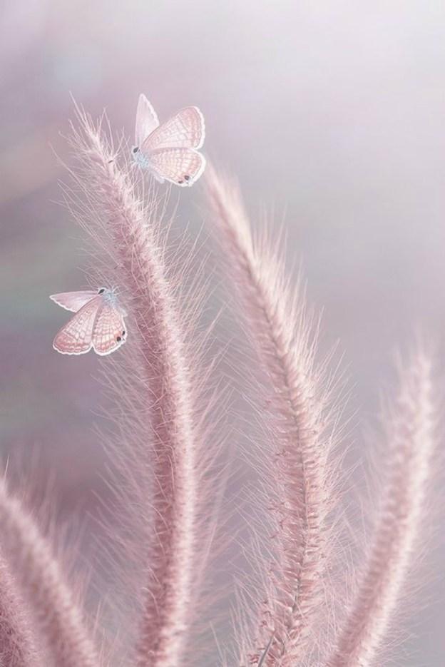 Фото двух бабочек