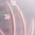 А вы заметили бабочку?