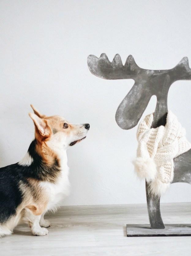 Корги Чипс и деревянный лось