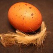 chickens-marans-egg-150x150.jpg?resize=185%2C185&ssl=1