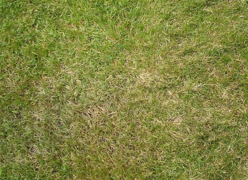 dormant or dead lawn