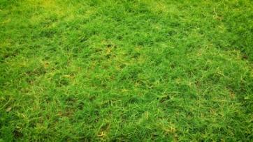 green grass yard area for dog