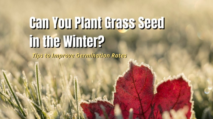 plant grass seed in winter
