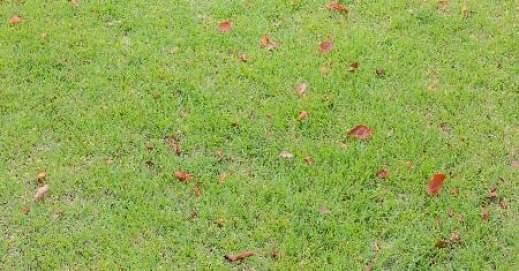 chemical free lawn