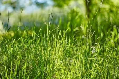 grass mow length