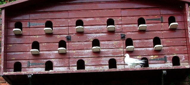 A dovecote used for squab farming and raising pigeons for backyard meat production and commonly used by preppers