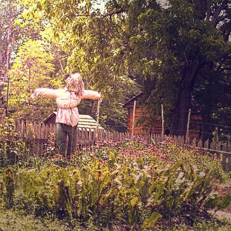 a scarecrow guards a garden plot on a homestead