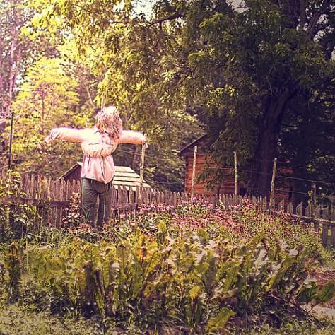 a scarecrow guards a garden plot on a homestead