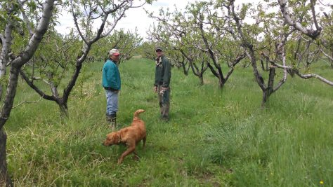 Evaluating the peach orchard in the spring at Hummin' Bird Farms in Hotchkiss, Colorado
