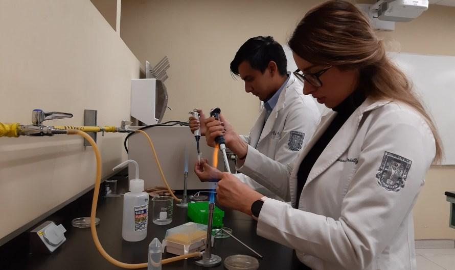 Desarrolla pruebas la UABC para diagnóstico de Ricketssiosis, problema de salud que no se ha ido de Mexicali
