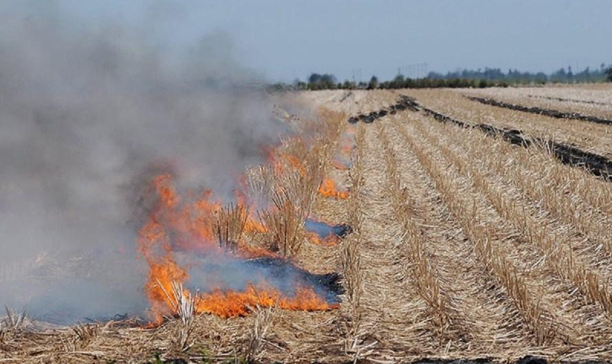 Exhorta Secretaría del Campo y Seguridad Alimentaria a trigueros de Valle de Mexicali a no quemar residuos de cosecha