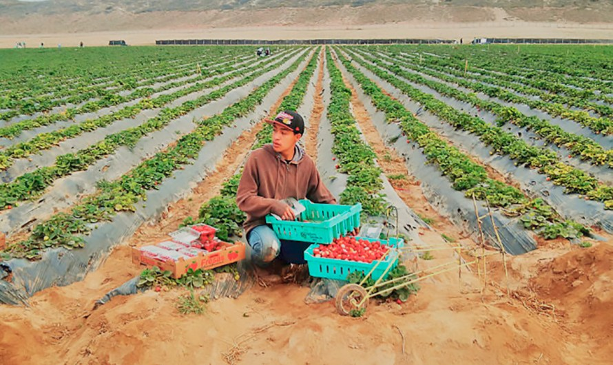 Tomato: A very profitable crop for Baja California: Juan Manuel Martínez Núñez