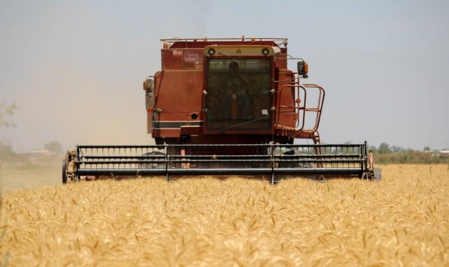 Avance en cosecha de 42 mil hectáreas de Trigo en el Valle de Mexicali: Haros Encinas