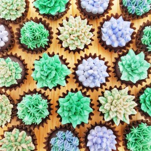 Mini Succulent Cupcakes by The Baking Experiment